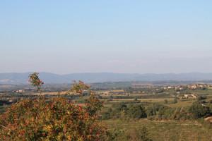 montepulciano (11)