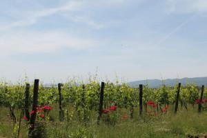 winesurfing (25)
