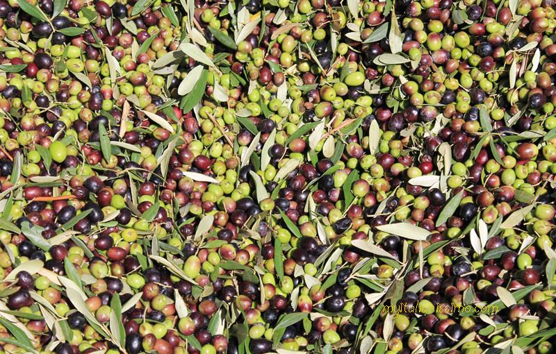 Umbria's Green Gold @ MARFUGA -Campello sul Clitunno, PG