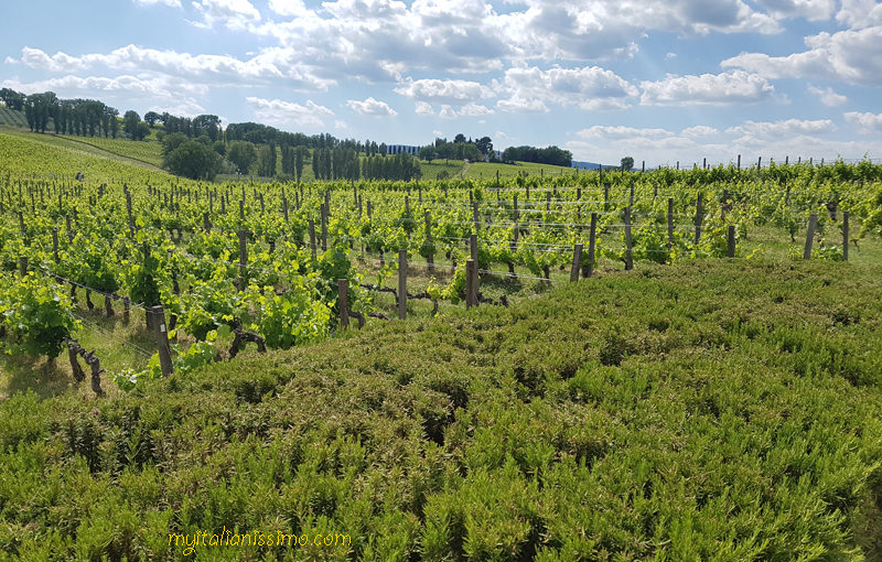 The True Taste of Umbria  @ARNALDO CAPRAI – Montefalco